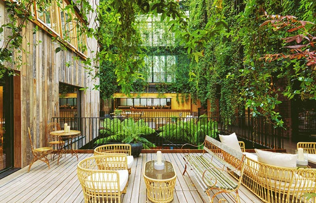 Mandrake Hotel article
